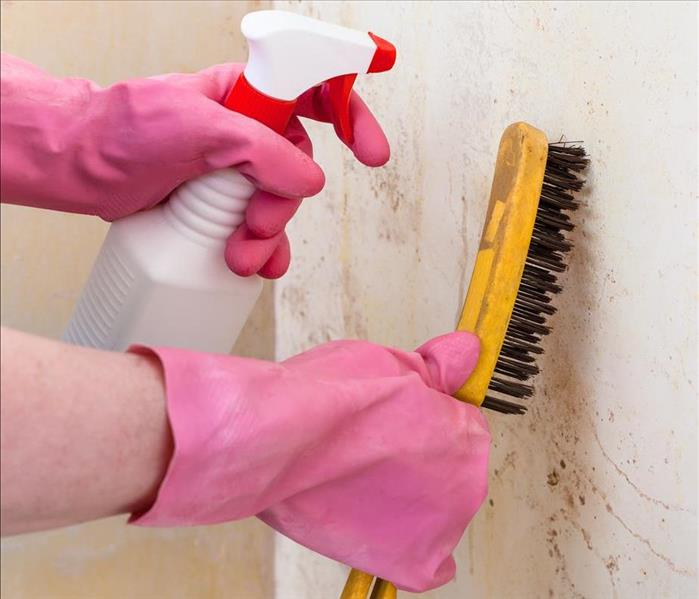 Removing mold from the living accommodation with cleaning substance